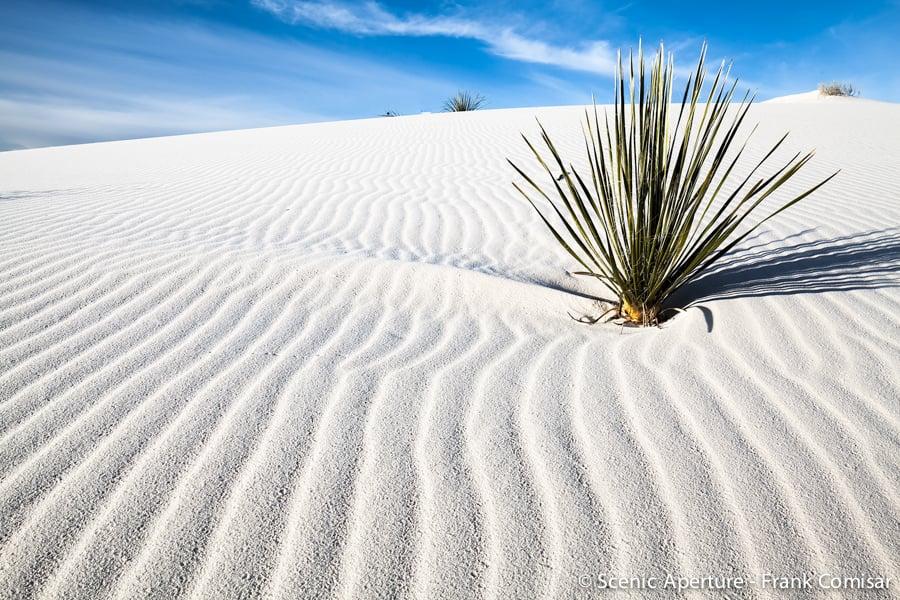 Chihuahuan Desert, NM
