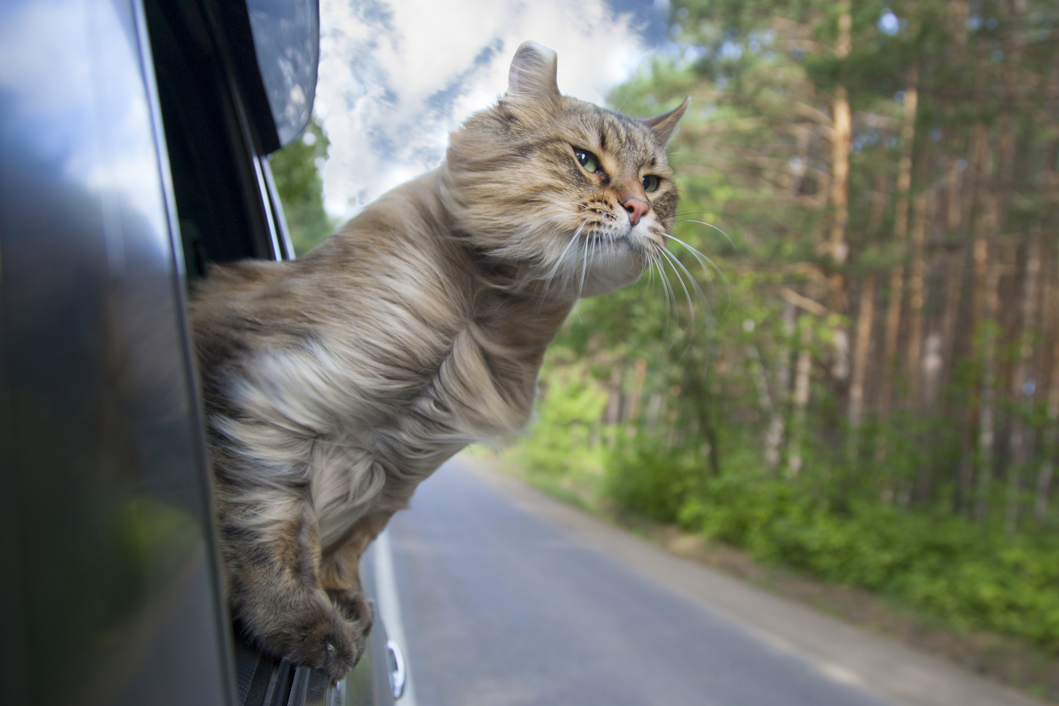 traveling with pets 2