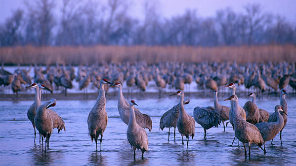 cranes NE