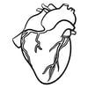 cvp_heart